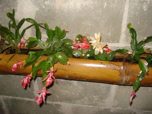 vaso-de-bambu-com-orquidea