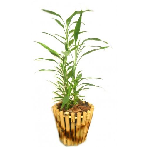 vasos-de-bambu-ideias-para-fazer