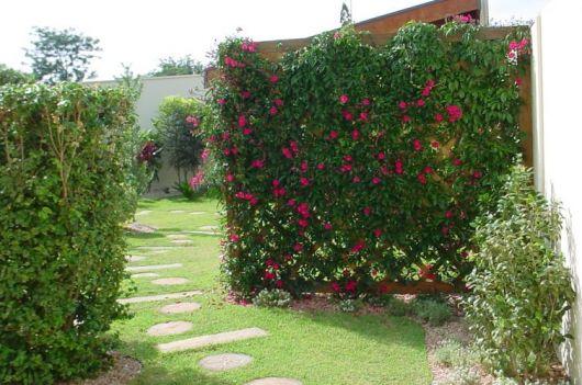 flores-trepadeiras-ipomeia