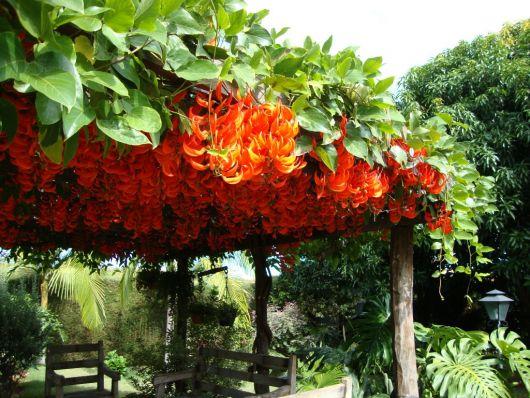 flores-trepadeiras-jade