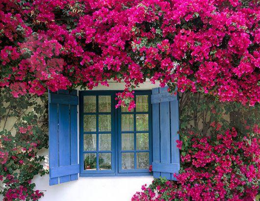 flores-trepadeiras-primavera