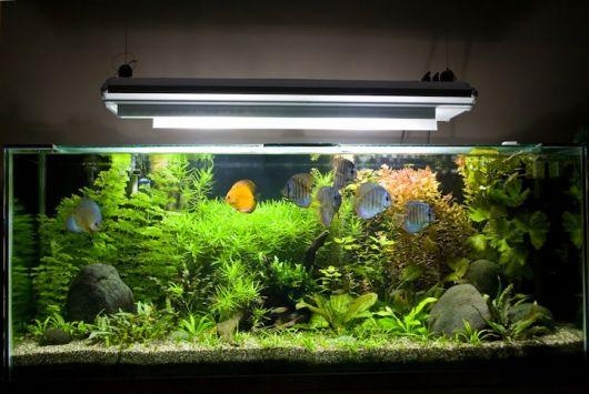 aquario-plantado-2