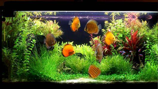aquario-plantado-3