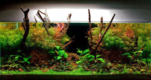 aquario-plantado-4
