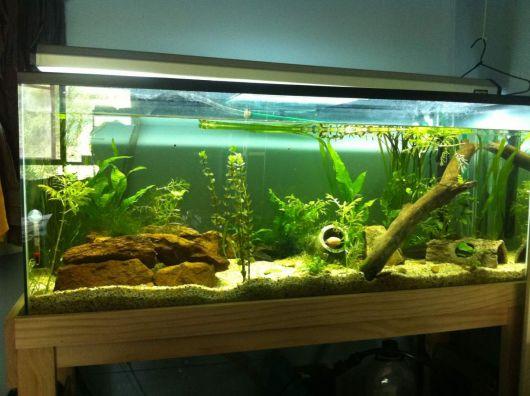 aquario-plantado-6