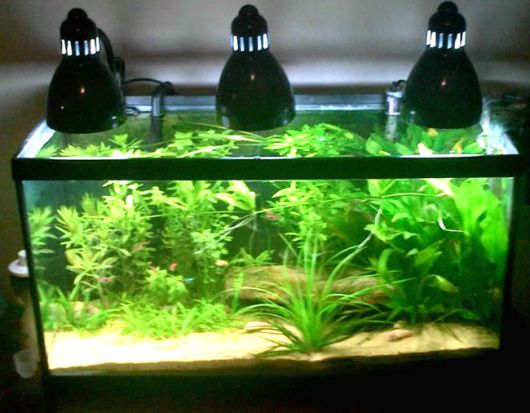 aquario-plantado-7