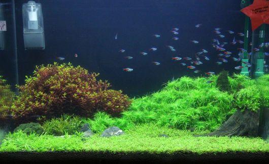aquario-plantado-como-e
