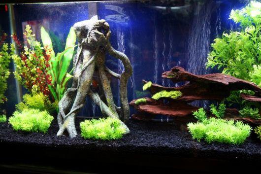 aquario-plantado-como-montar