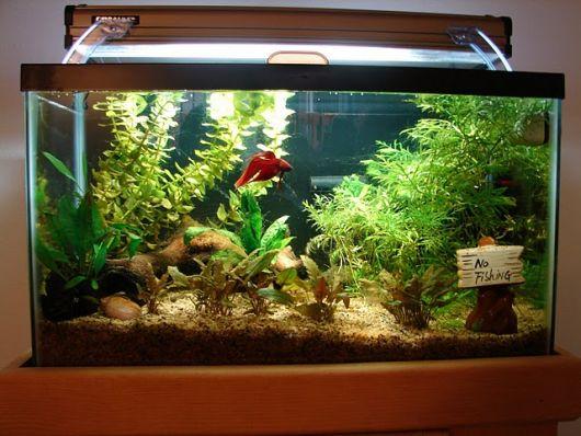 aquario-plantado-compacto