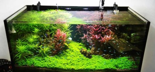 aquario-plantado-design