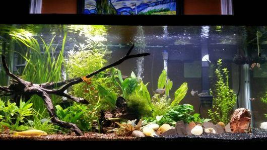 aquario-plantado-destaque