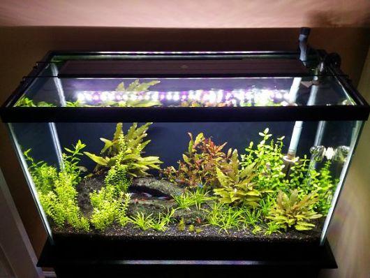 aquario-plantado-em-casa