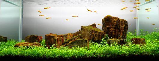 aquario-plantado-ideias
