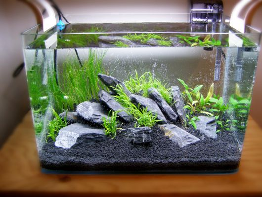 aquario-plantado-low-tech