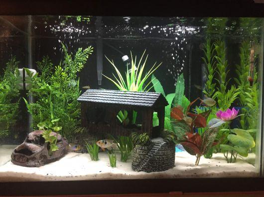 aquario-plantado-o-que-e