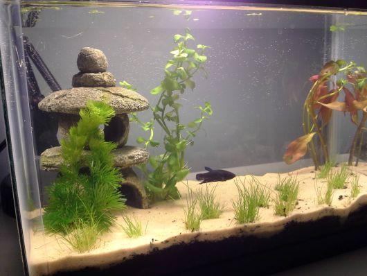 aquario-plantado-simples