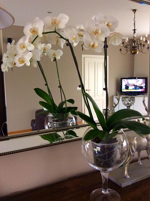 decor-orquideas