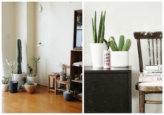 plantas-para-sala-cacto