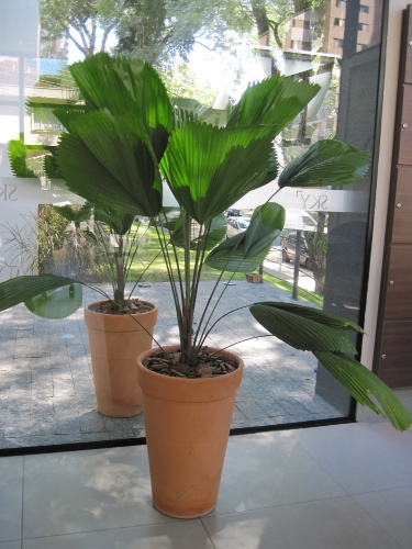 plantas-para-sala-leque