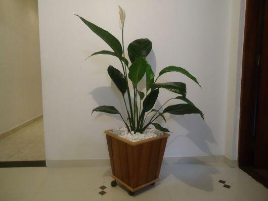 plantas-para-sala-lirio-paz