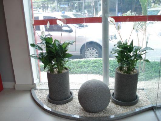plantas-para-sala-lirio
