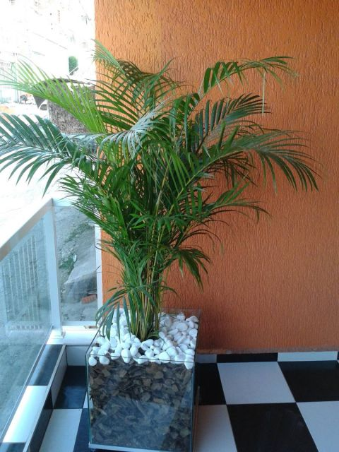 plantas-para-sala-palmeira-areca