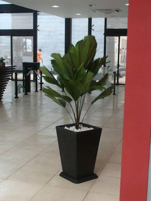 plantas-para-sala-palmeira-leque