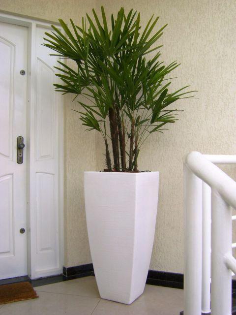 plantas-para-sala-rafia