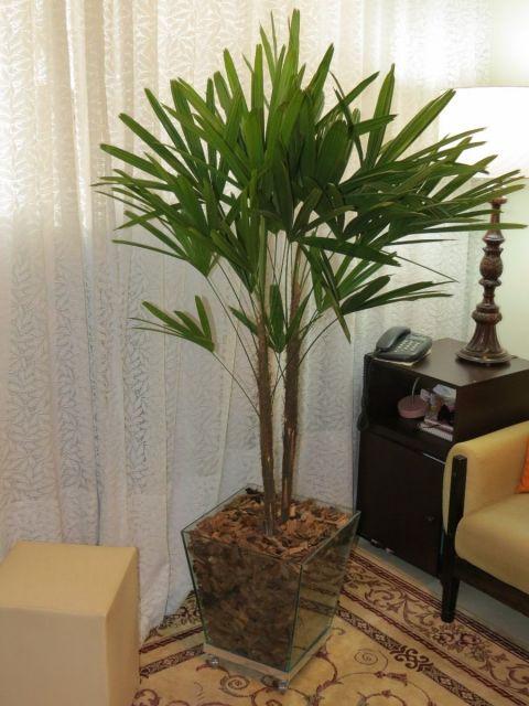 plantas-para-sala-rafis