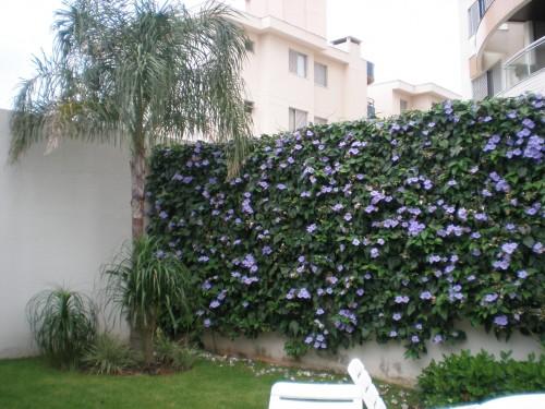 Plantas trepadeiras esp cies e fotos de muros e p rgolas for Tela para muro verde