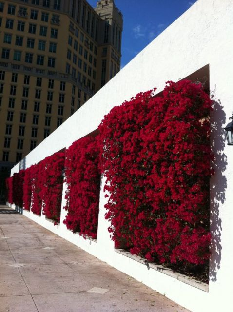 muro com primavera