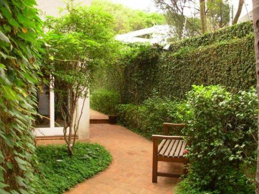 Plantas trepadeiras esp cies e fotos de muros e p rgolas for Plantas muro verde