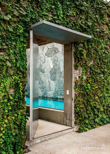 muro verde planta