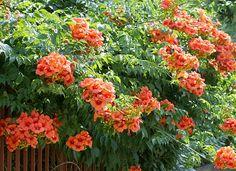 planta com flor