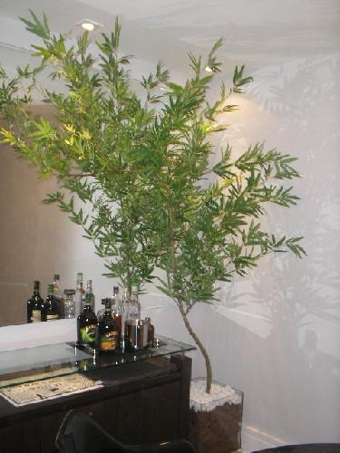 arvore-artificial-bambu-mosso-modelo