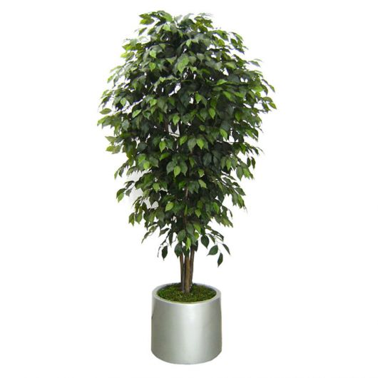 arvore-artificial-ficus-real