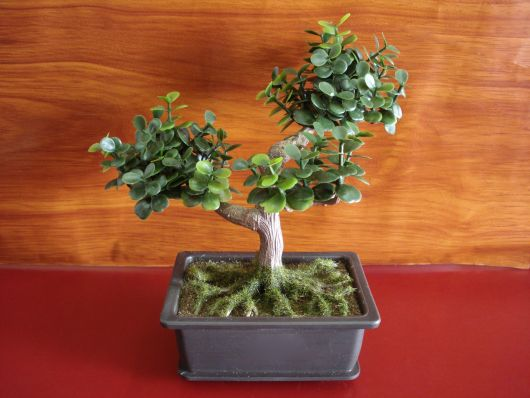 arvore-artificial-mini-bonsai-especie