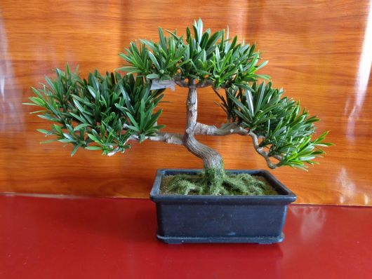 arvore-artificial-mini-bonsai-modelo