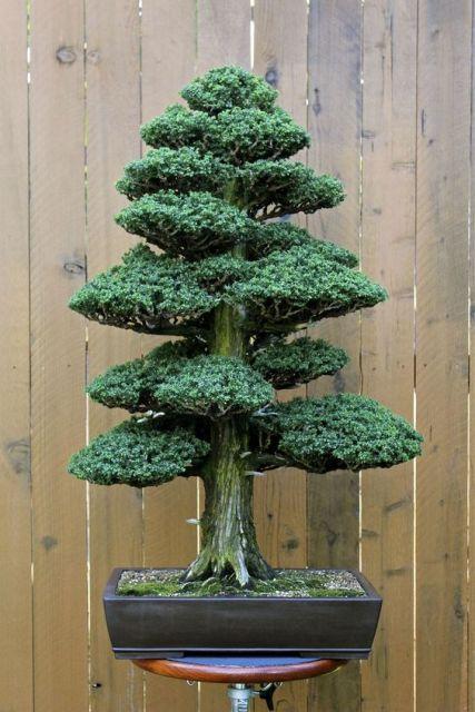 arvore-artificial-mini-bonsai