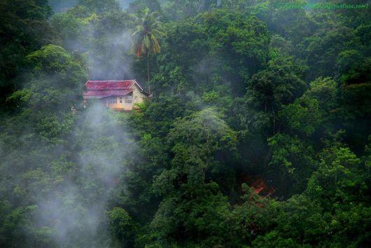 casas-na-floresta-destaque
