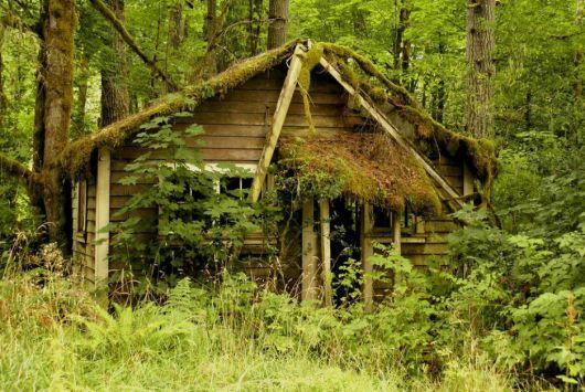 casas-na-floresta-antiga-e-simples