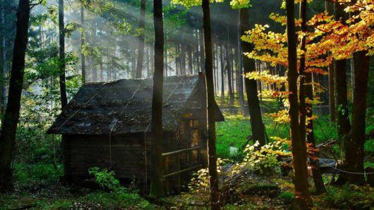 casas-na-floresta-simples-4