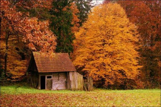 casas-na-floresta-simples-6