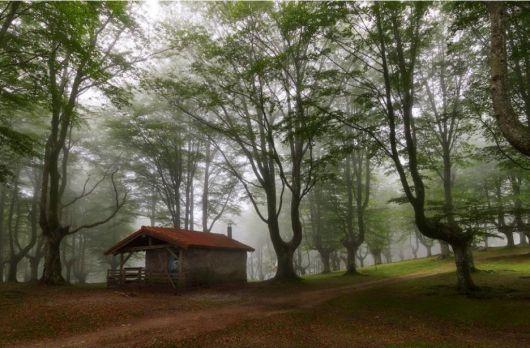 casas-na-floresta-simples-comum