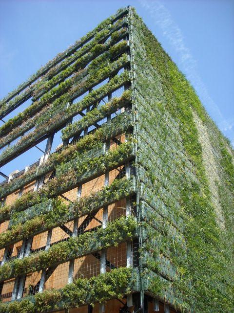 fachadas verdes ecol gicas vantagens e 30 fotos de