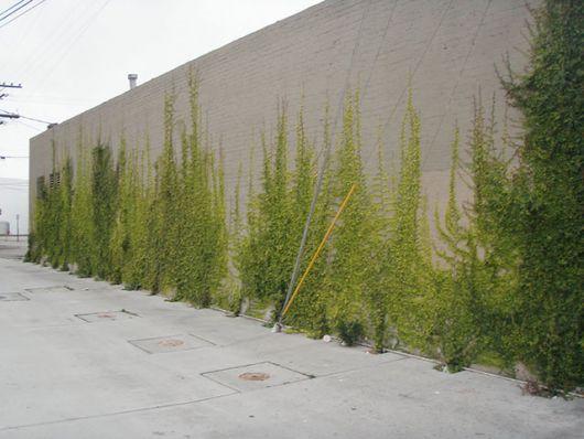 fachadas-verdes-ecologicas-6