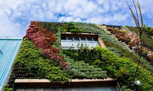 fachadas-verdes-ecologicas-jardim-vertical
