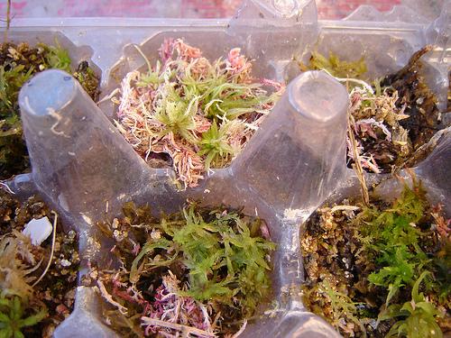 decoração com musgos