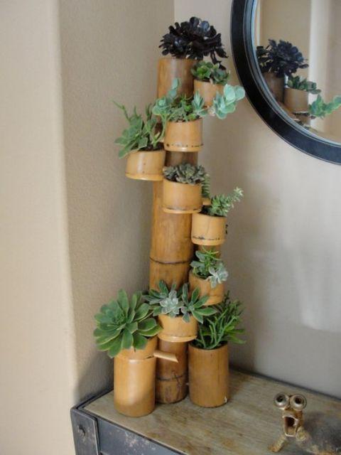 decoração com suculentas