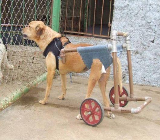 cadeira-de-rodas-para-cachorro-1